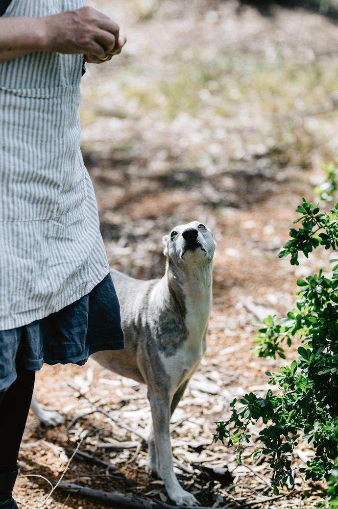 """John reminisces, """"We love taking [adventure holidays](https://www.homestolove.com.au/best-horse-trail-rides-australia-10353 target=""""_blank"""") and we've walked the Bibbulmun Track — 1000 kilometres from end to end — and the Cape to Cape, both in WA, as well as the Overland Track and South Coast Track in Tasmania..."""""""