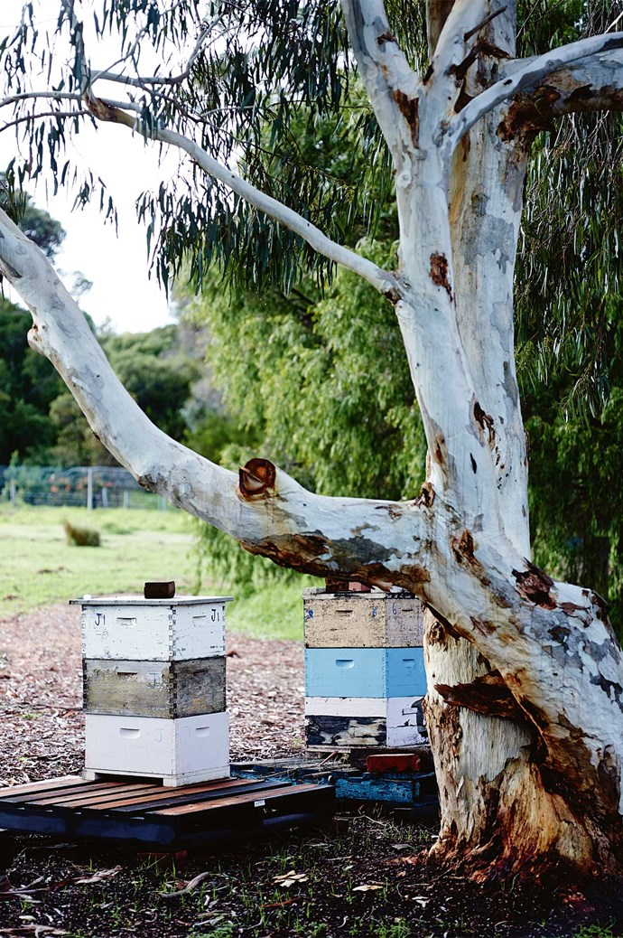 Beehives sit below the avocado grove; bees subsequently pollinate the avocados. Each cog in the farm's ecosystem ticks over like clockwork.  | Photo: Mark Roper