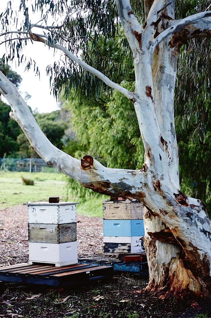 "[Beehives](https://www.homestolove.com.au/adding-a-bee-hive-to-your-garden-9890|target=""_blank"") sit below the avocado grove; bees subsequently pollinate the avocados. Each cog in the farm's ecosystem ticks over like clockwork."