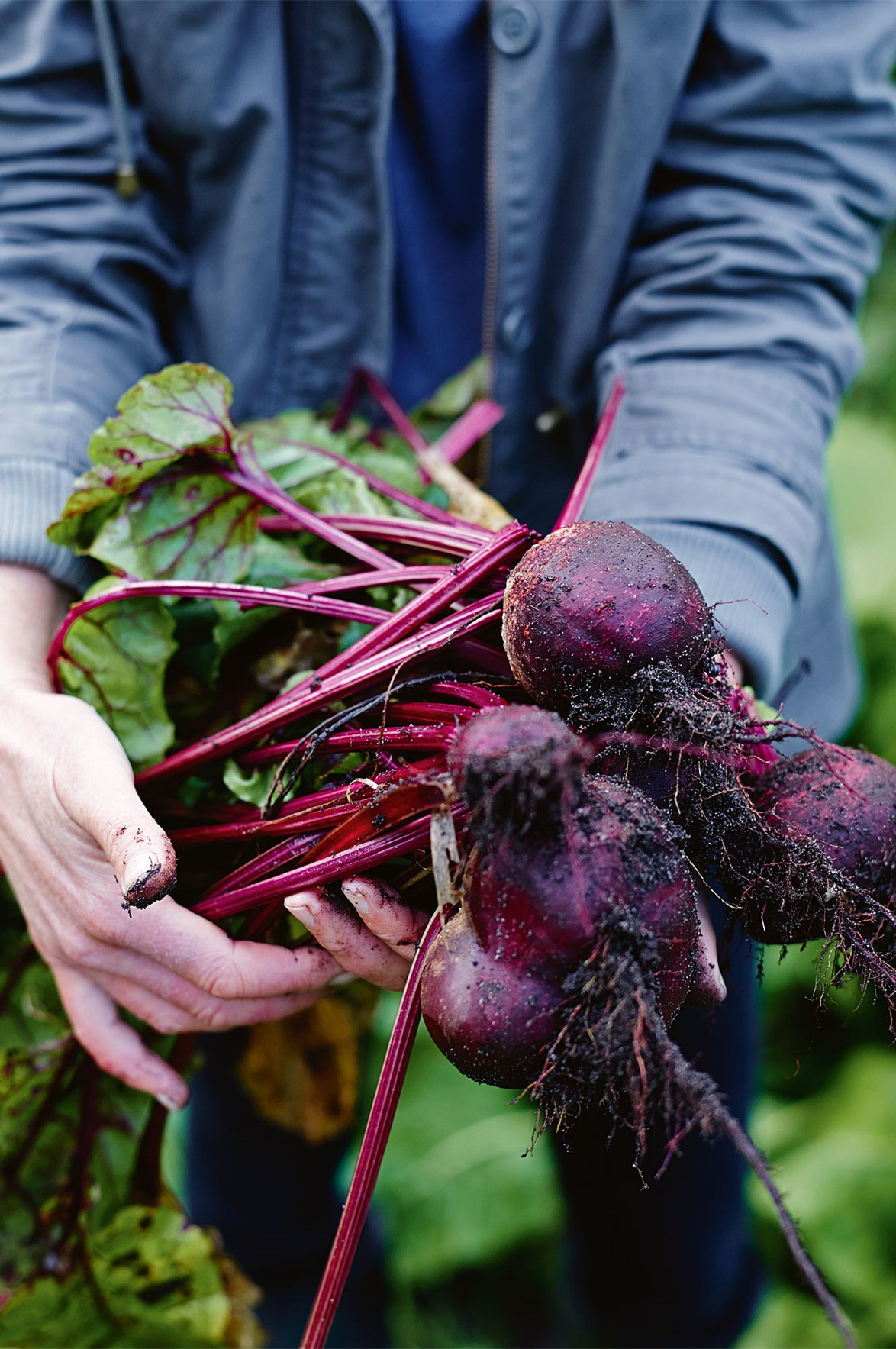 "Freshly harvested beetroot at an [organic farm in Margaret River](https://www.homestolove.com.au/organic-farm-margaret-river-western-australia-13994|target=""_blank"")."