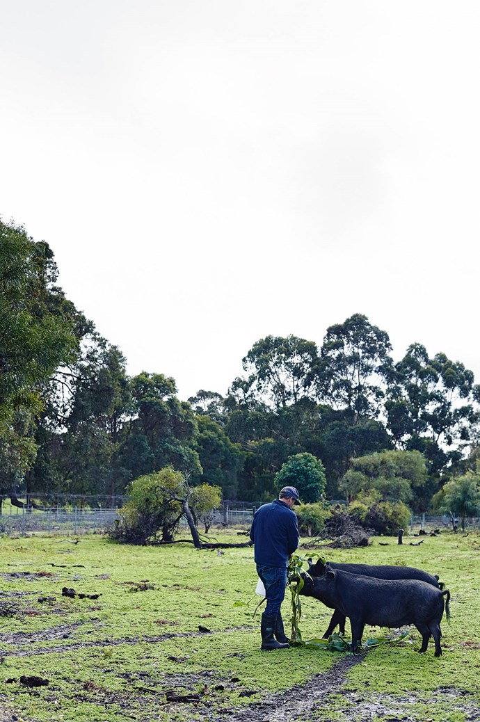 """We put a lot of effort into growing our own food and keeping our animals for consumption,"" Lara explains. Four pigs on the farm are fed avocado waste.  
