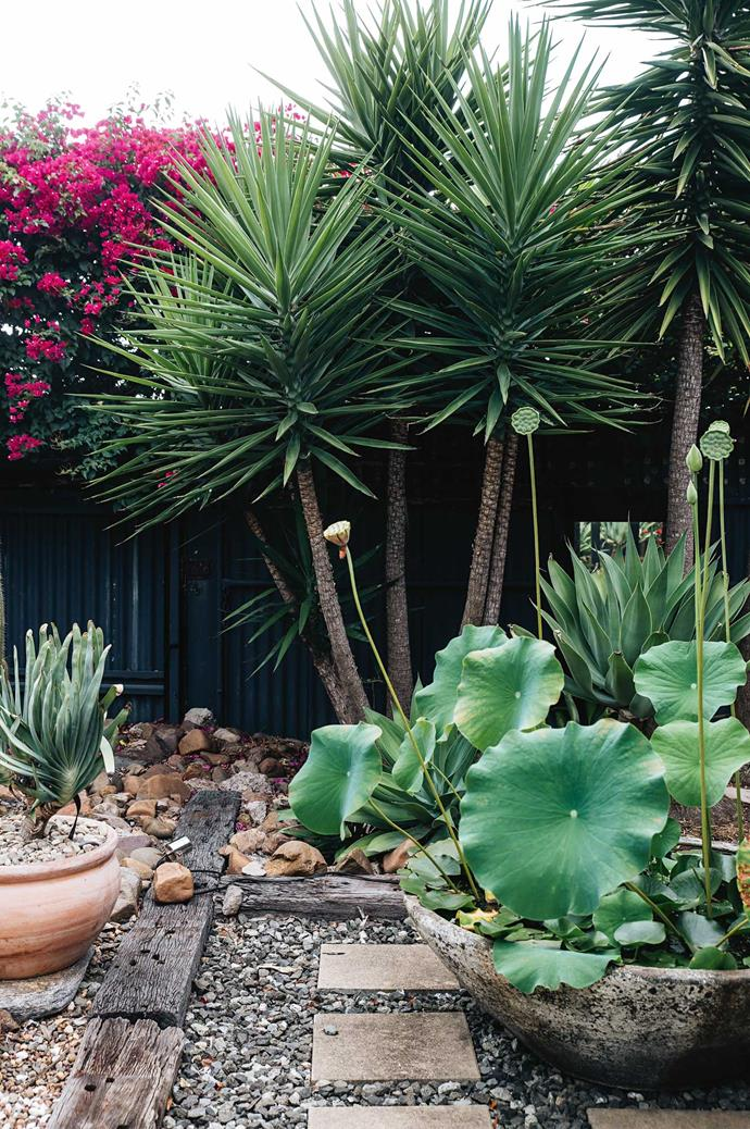 Lotus lilies provide a soft foil to the dry landscape.