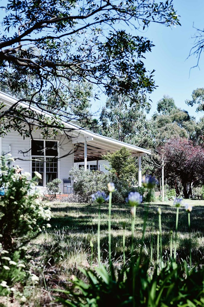 The family's white weatherboard farmhouse is set among a five-hectare grove of eucalypts, shady oaks and orchard trees, with lush paddocks running down to a creek for their pet alpacas.  | Photo: Mark Roper