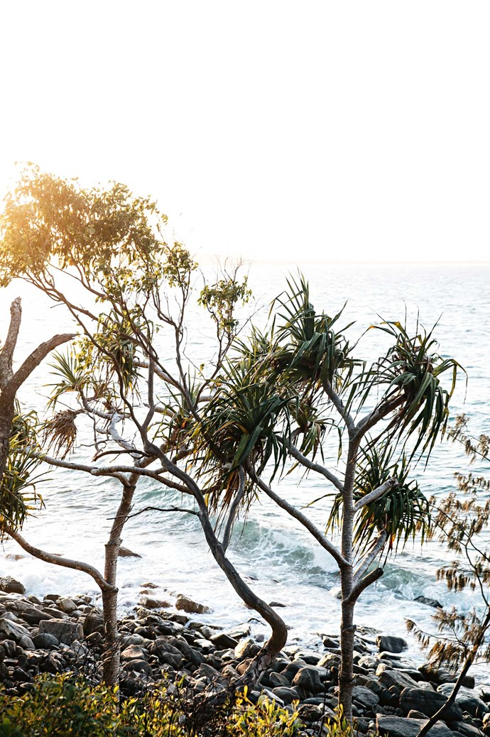 [Noosa National Park](https://www.npsr.qld.gov.au/parks/noosa/). At one end of Hastings Street, a boardwalk follows a scenic 30-minute trail to the entrance of Noosa National Park. Walkers might spot a koala or black cockatoo along the way. | Photo: Abbie Melle