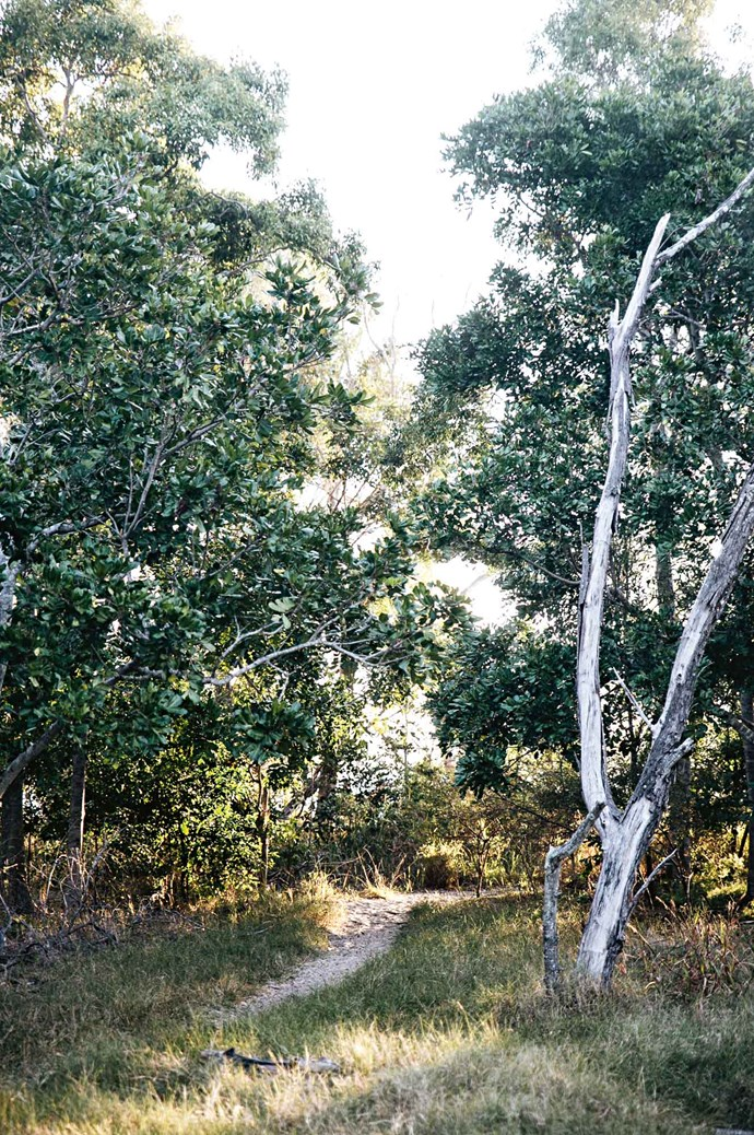 With its spectacular surf beaches and national park, Noosa was recognised as Queensland's first UNESCO Biosphere Reserve. | Photo: Abbie Melle