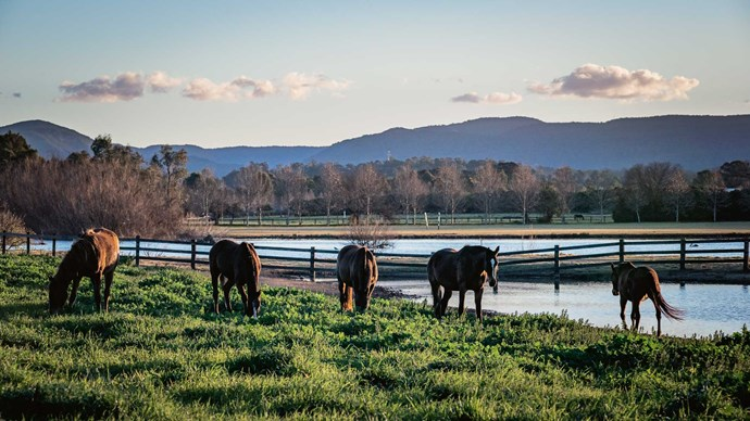 """Horses enjoy the good life on the lowlands beside the [Hawkesbury River](https://www.homestolove.com.au/a-converted-19th-century-church-on-the-hawksberry-river-5132 target=""""_blank"""") in Richmond."""