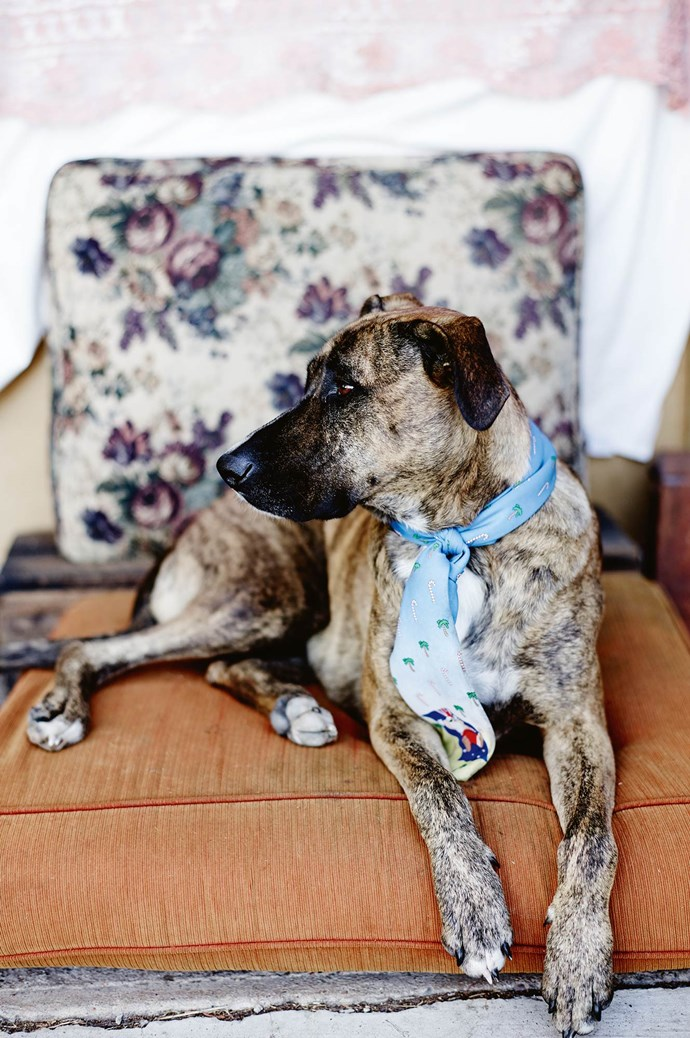 Bare Nature's Kin owner Michelle Waite's dog, Magnus, is well known for wearing men's silk ties. | Photo: Mark Roper