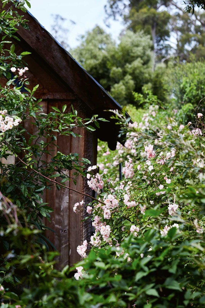 Such a garden is likely to often grow out of control, so Tom and Fraser regularly spend their time outdoors. In winter, pruning is done with a hedge trimmer.