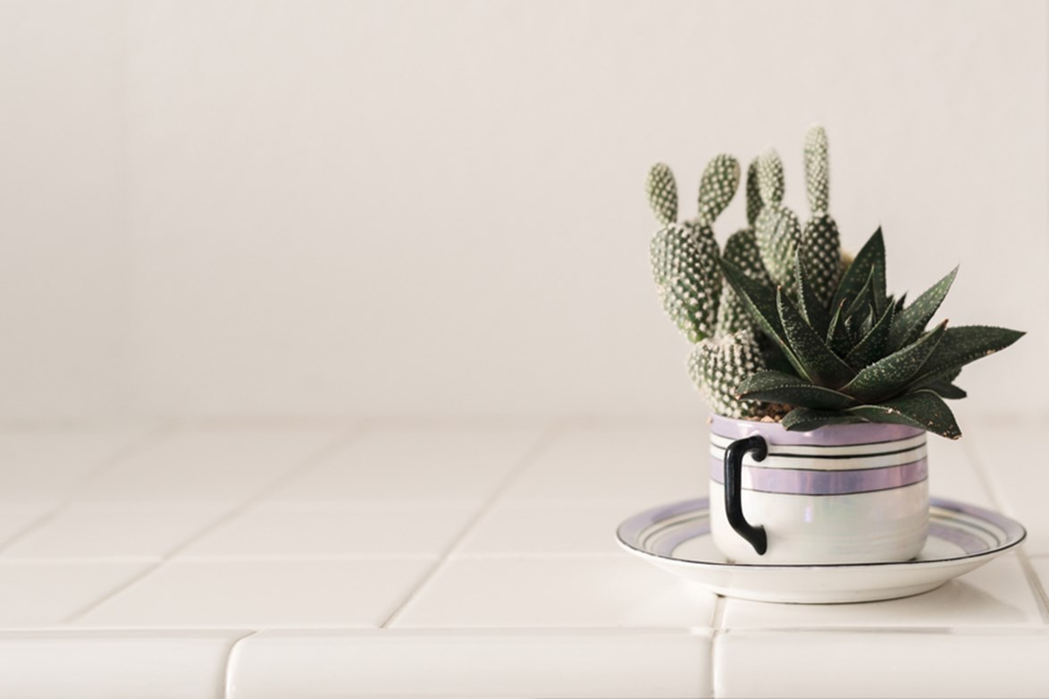 **Tea time:** A cactus in a favourite old tea cup (or perhaps you have an heirloom cup and saucer lying around), is a kitsch idea for repurposing odd ceramics or op-shop finds. This would also make an excellent gift!