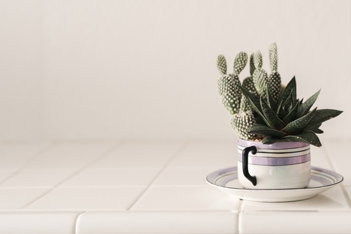 2. Tea time: Need we say more? A cactus in a favourite old tea cup (or perhaps you have an heirloom cup and saucer lying around), you had us at hello!