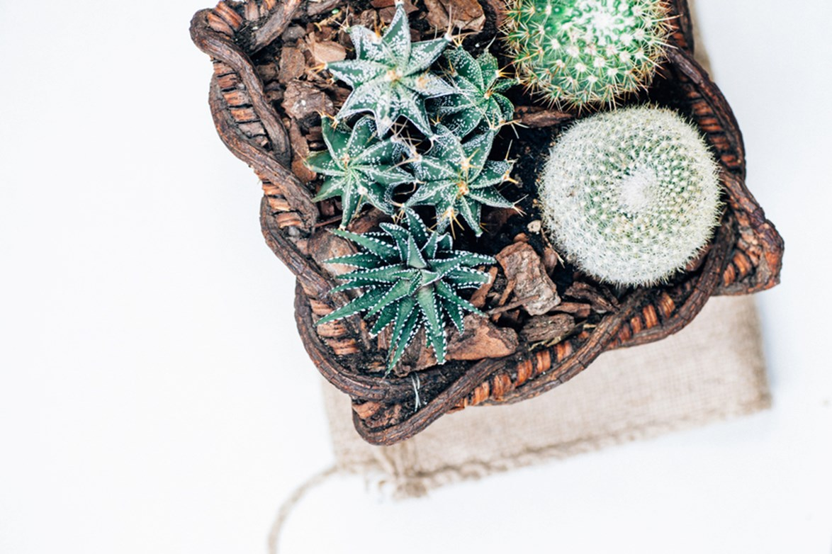 **Basket case:** Think outside the pot and opt for baskets to create a stylish home for your cacti collection. The natural, woven materials team nicely with textural cactus plants.