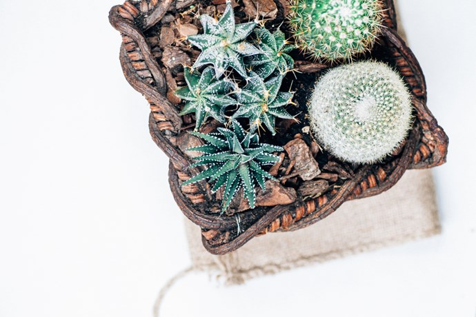 1. Basket case: Step outside the square and opt for baskets to play home to your cactus rather than the obvious pots. The natural materials of baskets like this really team nicely with cactus plants.