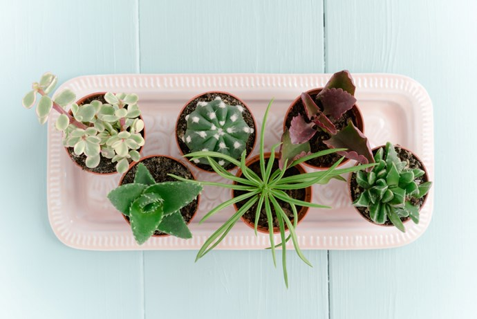 3. Mini size: Rather than simply planting one larger cactus, we love the idea of potting mini cactus and clustering a number of pots together like in this display.