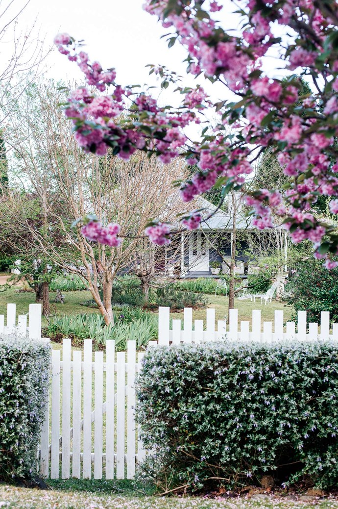 The front of the 1910 weatherboard cottage features white French doors. In the front yard stands a cherry blossom tree and hedge of teucrium.