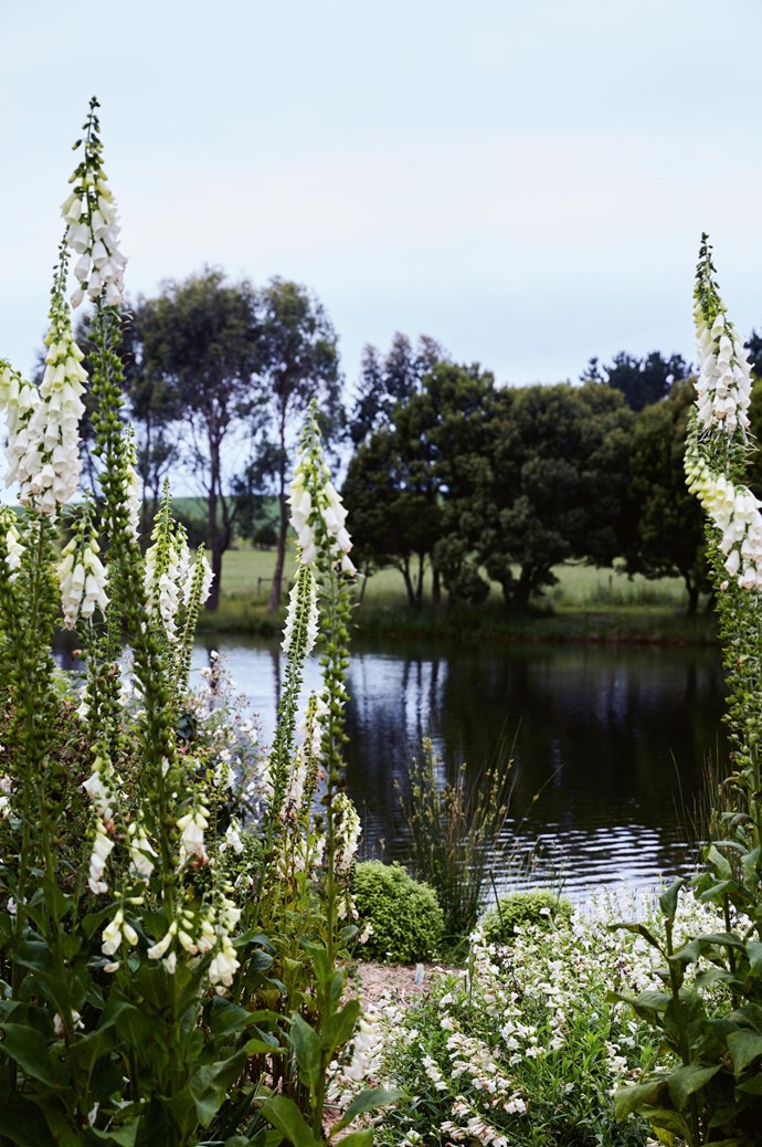 "Though considered a rose grower's paradise, other beauties like cherries and crabapples also feature alongside massed birch and coppices of wattles. Etoline's Island is festooned with foxgloves, [flowering annuals and perennials](https://www.homestolove.com.au/perennial-plants-2079|target=""_blank"")."