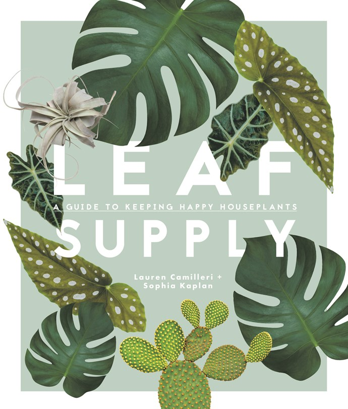 This is an edited extract from [Leaf Supply: A Guide to Keeping Happy Houseplants](http://www.smithstreetbooks.com/books/leaf-supply/) by Lauren Camilleri and Sophia Kaplan (Smith Street Books, $49.95). For further information, you can also visit their website [here](http://www.smithstreetbooks.com/books/leaf-supply/).