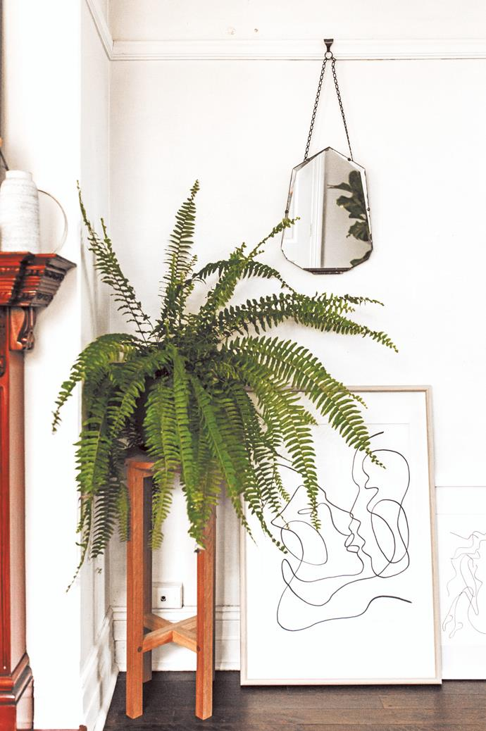 On stands. A great way to add depth and height to your plant displays is with the help of plant stands. While beautiful in their own right, these accessories also provide flexibility in placing plants around existing furniture. From timber beauties to the more architectural wire varieties, you're spoilt for choice. Mix it up with varying heights, shapes and materials.  | Photo: Luisa Brimble