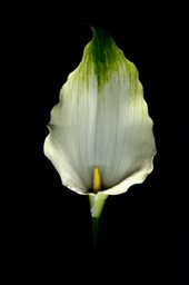10 May wedding flowers