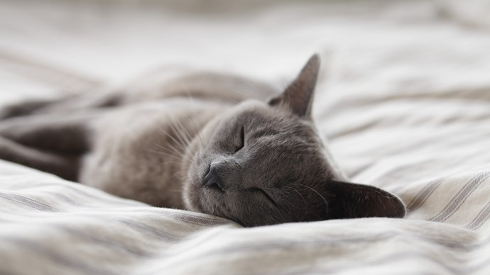 1\. Purring can be conducive to sleep. Sleep specialist Dr. Lois Krahn [says](https://www.independent.co.uk/life-style/sleeping-pet-dog-bed-better-night-rest-study-mayo-clinic-a7942861.html ) a purring cat or an obedient dog will create a relaxed bedroom environment. They need not be on the bed, just in the same room. Image courtesy of [Alexander Possingham](https://www.instagram.com/coreworlds/?utm_medium=referral&utm_source=unsplash)
