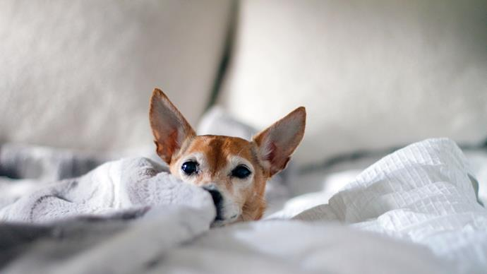 """3\. Stroking your pet releases oxytocin, or the """"cuddle chemical"""". This trumps any (inanimate!) pillow. Japanese animal behaviourist Takefumi Kikusui [discovered](http://science.sciencemag.org/content/348/6232/333.full) that oxytocin fosters a sense of trust and bonding, which humans and animals (dogs, particularly) share when they gaze into each other's eyes. The chemical response is similar to the interaction between a mother and her baby. Image courtesy of [Jessica Knowlden](https://mybibimbaplife.com/?utm_medium=referral&utm_source=unsplash)"""