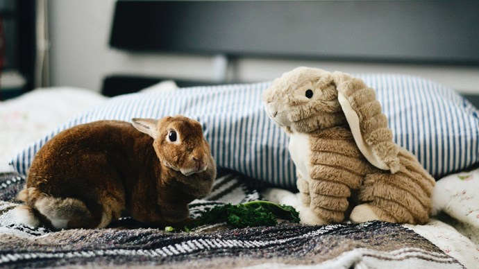 2\. Your pet brings a sense of security. Even the little ones — hey, good things come in small packages. While your bunny is an unlikely protector, their animal warmth will keep you feeling safe and comforted at night. Image courtesy of [Jennifer Chen](https://www.instagram.com/jnnfrchn/)