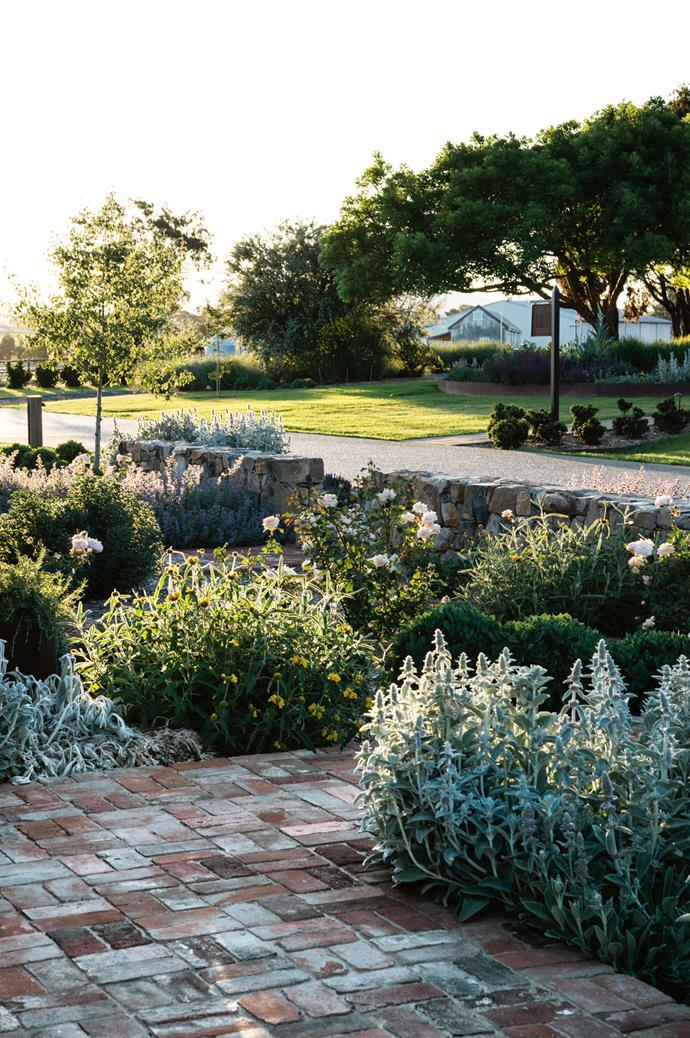 """Phlomis 'Lemon Blush', Stachys byzantina, Nepeta x faassenii 'Walker's Blue' and Rosa 'Apricot Nectar' are planted outside the village's Stone Store. Adam favoured [drought- and frost-tolerant perennials](https://www.homestolove.com.au/gallery-annas-drought-tolerant-garden-paradise-1864