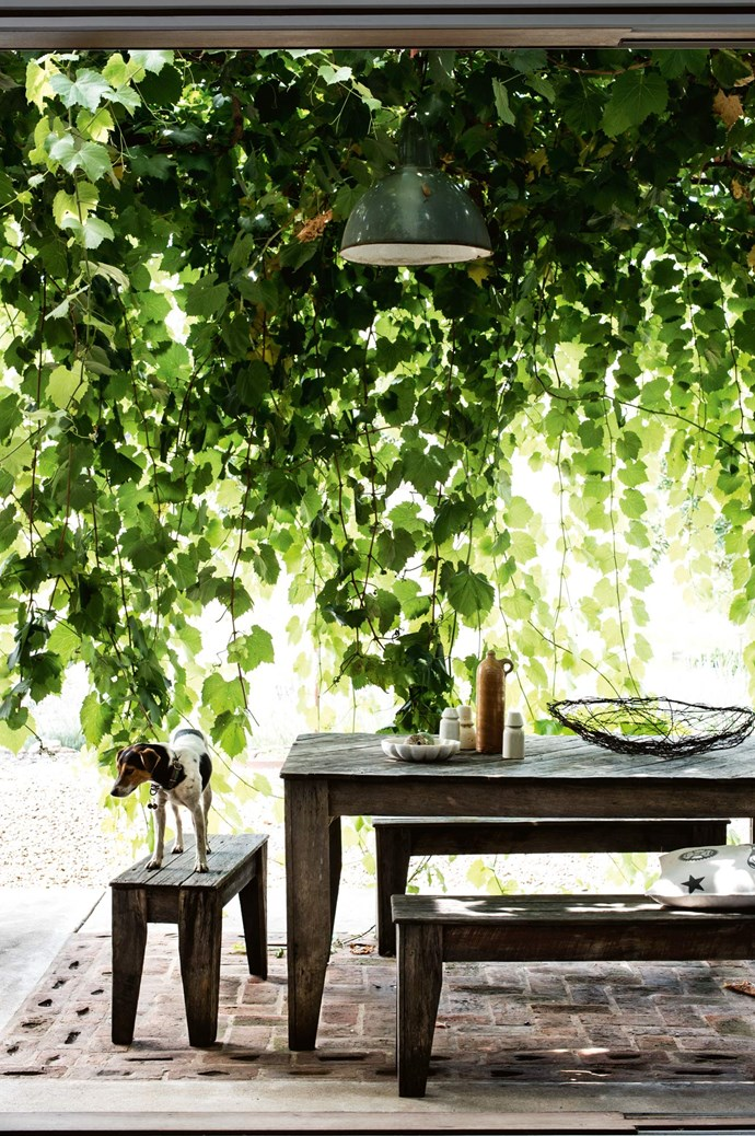 """We are obsessive gardeners. We're passionate about the benefits of ornamental [shade trees](https://www.homestolove.com.au/fast-growing-shade-trees-australia-6690
