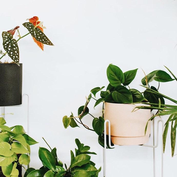 """Image: [leaf_supply](https://www.instagram.com/leaf_supply/ target=""""_blank"""")"""
