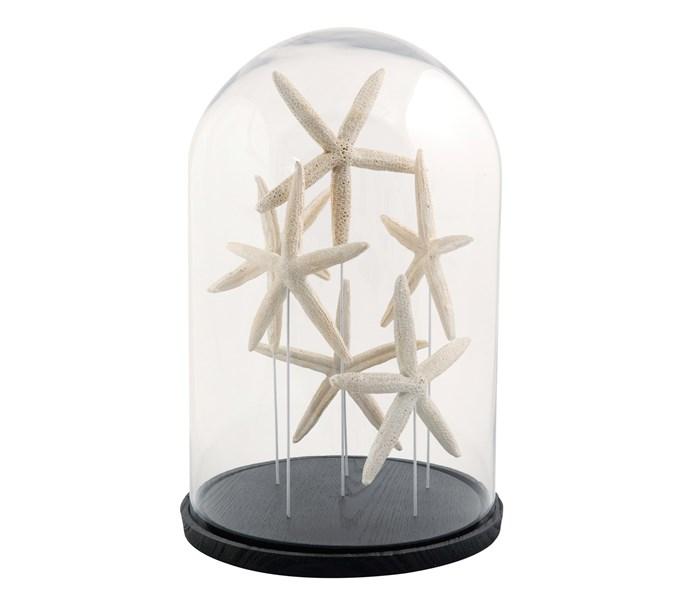 2\. Starfish cloche, $149, from [Alfresco Emporium](https://www.alfrescoemporium.com.au/).