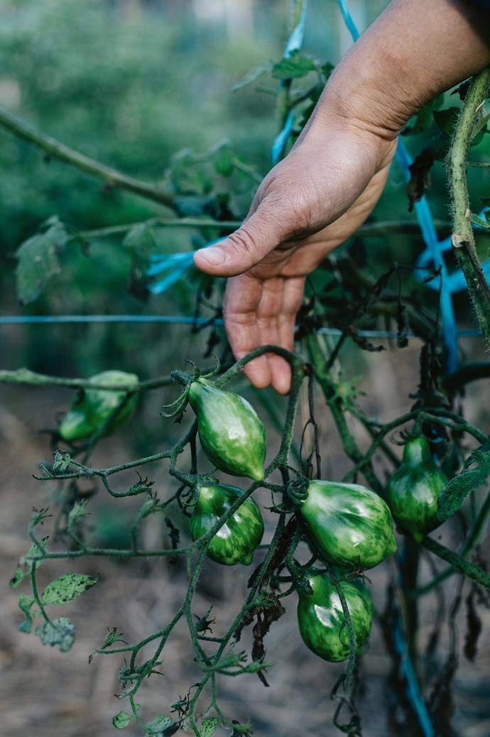 """Palisa loves the farm for the simple fact that it allows her family to eat what they grow, work and cook together. Life here is lived in the slow lane. """"Our home here was a push and pull between what we wanted and our resources and I think we got it right."""" 