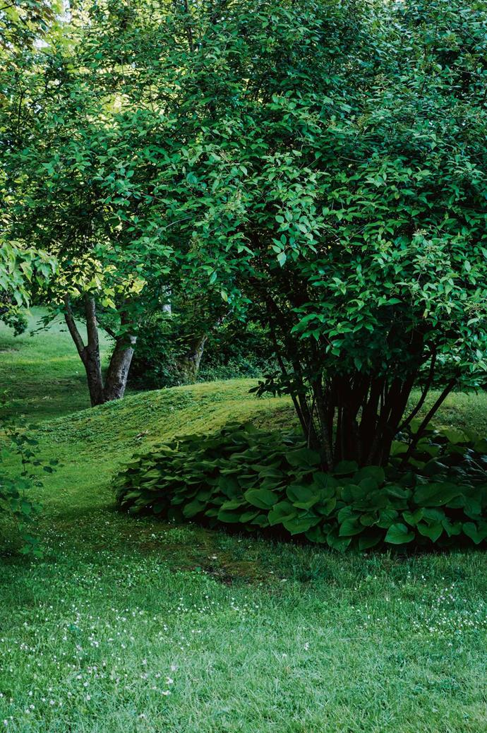 """The family love to picnic on this moss-covered mound under a leafy canopy of [deciduous trees](https://www.homestolove.com.au/beautiful-berry-plants-and-how-to-grow-them-6801 target=""""_blank"""")."""