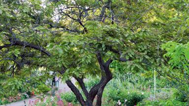 Adelaide flower garden