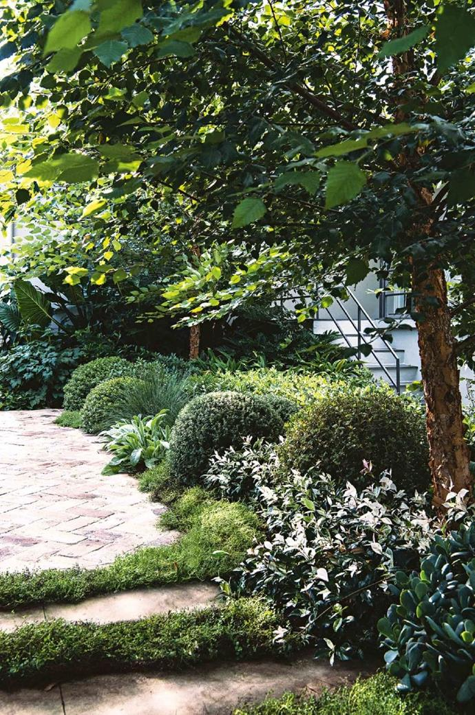 """""""The white groundcover is star jasmine 'Tricolour' and the green is creeping thyme,"""" says Julian. """"The grey plant bordering the paving is Stachys byzantina and the thin blue grasses are Lomandra 'Seascape'."""" Photographer: Brigid Arnott"""