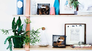 19 of the best indoor plants
