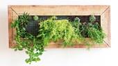 The best herbs to grow in your garden