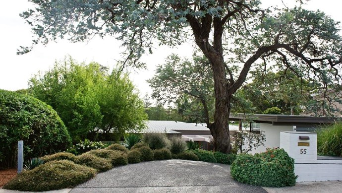 The greys and blues of the drive and large Argyle apple tree set the tones for the front garden, which slopes down from street level Photographer: Brigid Arnott