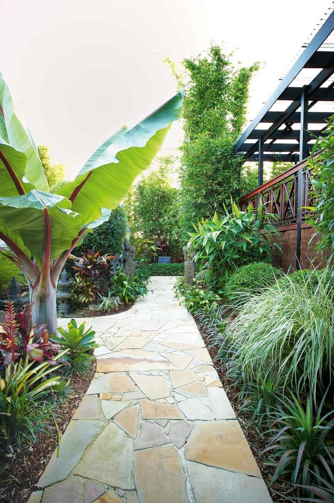 On the walkway's left is an Abyssinian banana that was grown from seed, while on the right, Chinese dwarf bamboo, tiger grass and oldhamii bamboo soften the paving Photographer: Michael Wee