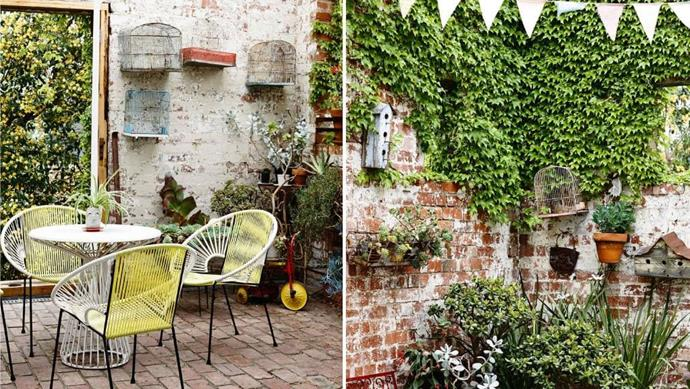 """Vines and [potted plants](https://www.homestolove.com.au/top-performing-potted-plants-for-your-garden-2183