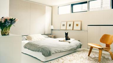 inside the homes and minds of cats