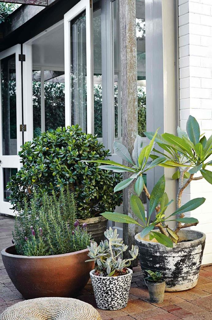 """Liven up a bare corner with a collection of [potted plants](https://www.homestolove.com.au/top-performing-potted-plants-for-your-garden-2183