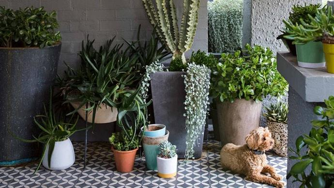 Landscape designer Peter Fudge uses succulents and textural elements to create his own low maintenance garden in Sydney. Photographer: Jason Busch