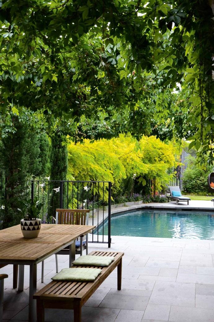 """Fine metal-rod fencing surrounds the pool which was chosen because it requires less cleaning than glass. Virginia creeper provides summer shade and autumn colour over the entertaining area.  [Tour this tranquil garden](https://www.homestolove.com.au/a-tranquil-garden-design-in-the-inner-city-17510