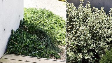Fall in love with this beachside home's dreamy native garden