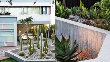 Palm Springs style: a striking modernist garden