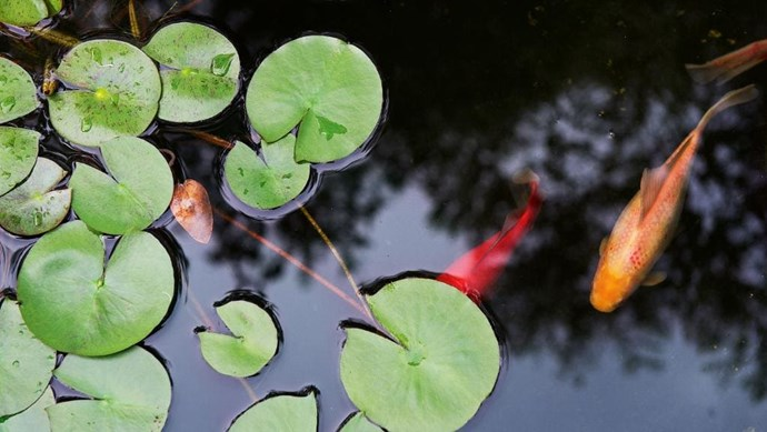 The fish provide flashes of colour in the courtyard at the front of the house Photographer: Brigid Arnott