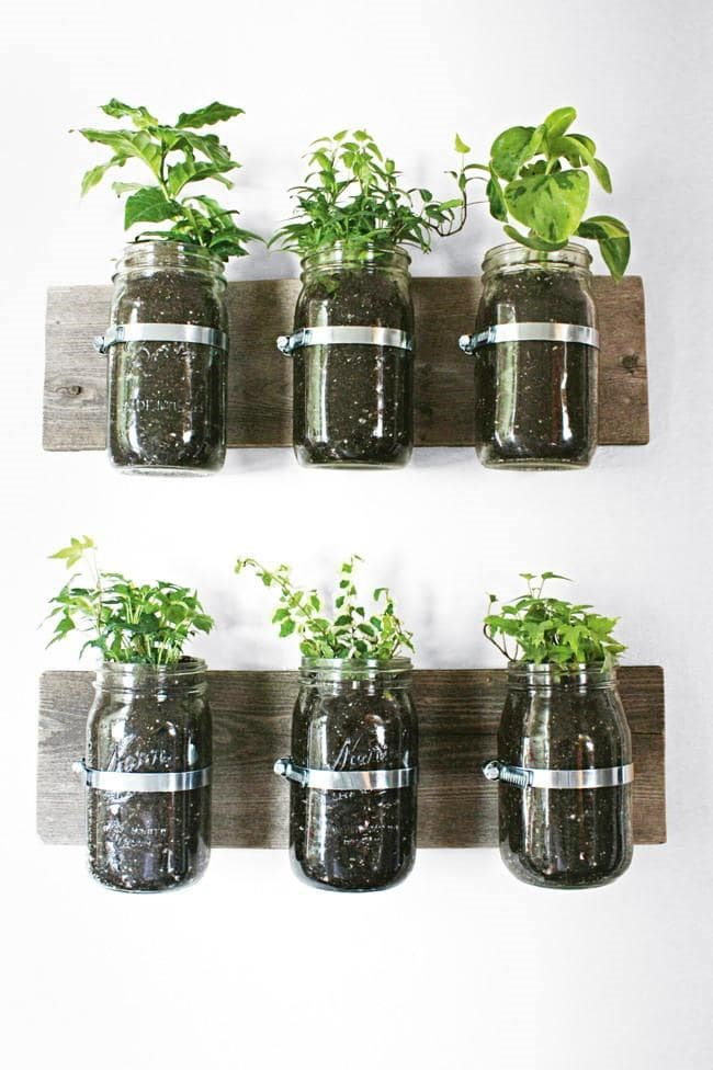 Glass jars are an effective way to showoff petite plants, as well as being a great indicator of their water levels. Secure jars to wall-mounted timber boards with metal fastening rings for a nature-inspired wall feature Photographer: Armelle Habib