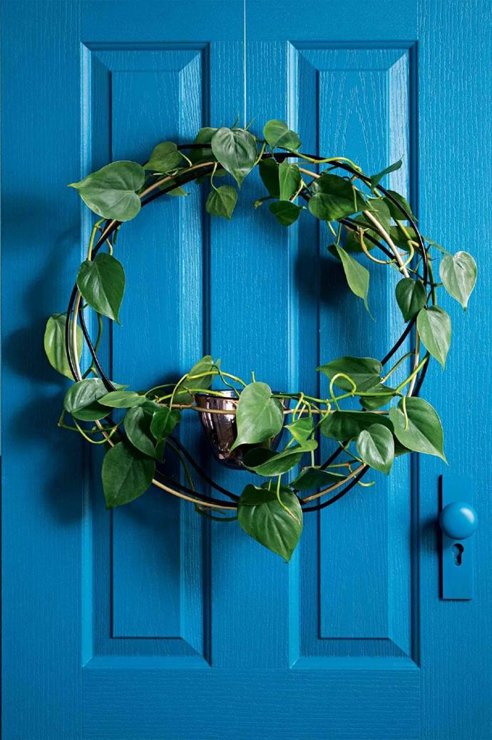 """BY Jacqui Vidal & Alana Langan, founders and designers of [Ivy Muse](http://ivymuse.com.au/): """"Our vision for the wreath was to create a living, breathing design incorporating greenery. We chose one of our favourite plants to work with (heart-leaf philodendron) and set about designing a wreath that made the beauty of the plant the focus. The piece features powder-coated and brass-plated steel with a support at the centre that holds an Ivy Muse X Amanda Dziedzic glass 'Nest' vessel, offering water for the plant. We've created a wreath that can grow during the festive season, something that can then be planted and continue to live on."""" Heart-leaf philodendron plant, $35, [Domus Botanica](https://www.domusbotanica.com.au/) Photographer: Craig Wall, Stylist: Jessica Hanson"""