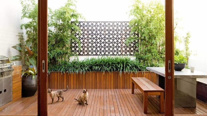 The decking here has been aligned so that it runs away form the living area and up the side of the newly installed garden bed giving the space a sense of depth. Height is provided by the tall bamboo, and the lower foliage is filled out with mondo grass. *Photo:* Sam McAdam-Cooper   *Styling:* Vanessa Colyer Tay