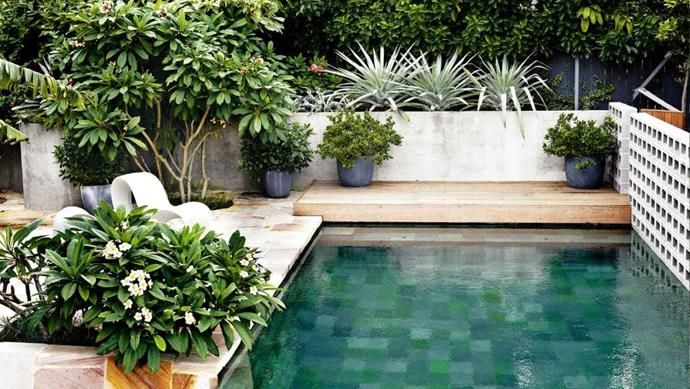 Poolside frangipanis provide heady summer fragrance while Beaumontia grandiflora was trained over support cables to form privacy screening from the neighbours. >> [See more of this garden](https://www.homestolove.com.au/peter-nixon-designed-garden-17220n) Photographer: Michael Wee