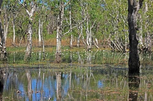 15. Tabletop Swamp - Litchfield NP